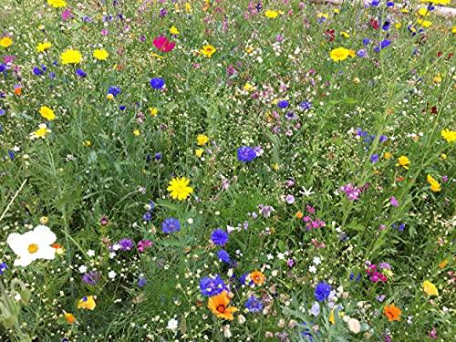 Blumenwiese mehrjährige für heimische Insekten und Bienen, winterharte Mischung für den bienenfreundlichen Garten, Blumen Wiese säen (200 m2)