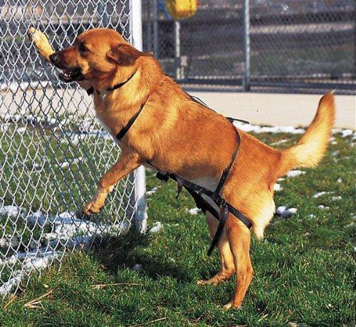 Scott Pet Jump Restraint