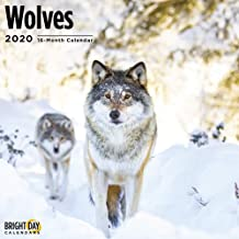 2020 Wolves Calendar 16 Month 12 x 12 Wall Calendar by Bright Day Calendars (Wild Animal Collection)