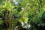 Scenolia Papier Peint Intissé Forêt et Rivière dans la Jungle Tropicale 3 x 2,70m - Décoration Murale Effet Trompe l'Oeil - Revêtement Panoramique Tapisserie XXL - Pose Facile et Qualité HD