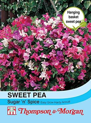Portal Cool Thompson & Morgan - Fleurs - Sweet Pea Sucre N éPices - 25 graines