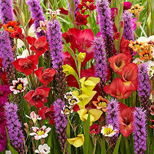 50x Blumenzwiebeln Mix | Gemischte Farben | Gladiolus, Sparaxis, Liatris Spicata | Sommerblumen Samen | Blumen Garten | Balkon Pflanzen | 50 Knollen