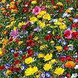 Risitar Graines - 50pcs Mélange fleurs des champs attirez mellifère papillons/abeilles/insectes, pour +/- 6 m², Grainé fleur jardin plante vivace résistante au froid