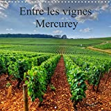 Entre les vignes Mercurey (Calendrier mural 2021 300 × 300 mm Square)