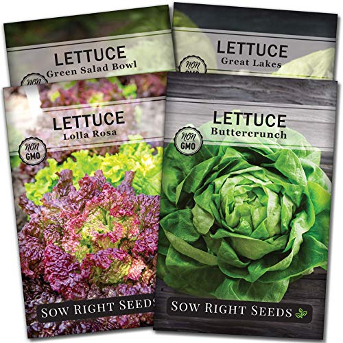 Sow Right Seeds - Lettuce Seed Collection for Planting - Buttercrunch, Great Lakes, Salad Bowl, and Lolla Rosa Varieties Non-GMO Heirloom Seeds to Plant a Home Vegetable Garden