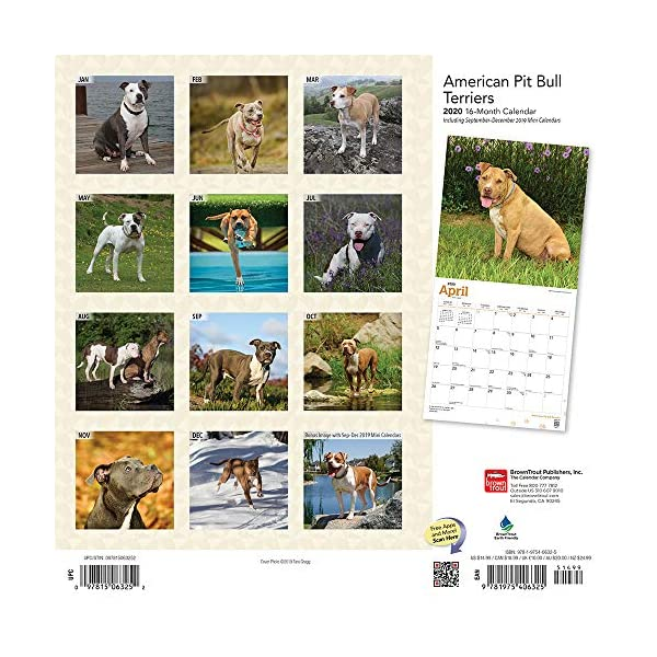 American Pit Bull Terriers 2020 12 x 12 Inch Monthly Square Wall Calendar with Foil Stamped Cover, Animals Dog Breeds (English, Spanish and French Edition) 2
