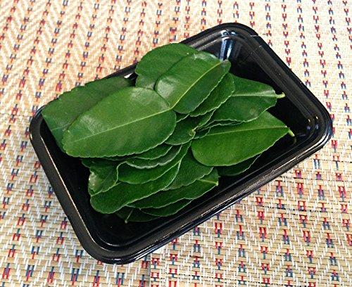 タイ産 新鮮輸入 バイマックル ( コブみかんの葉 )(20g) タイカレー トムヤムクン タイ料理 食材 エスニック ハーブ