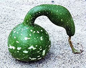 Alyf Market Speckled Swan Gourd Seed, Dry it, Paint it, and Have Fun with Seasonal displays! (sm Packet- 10 Seeds)