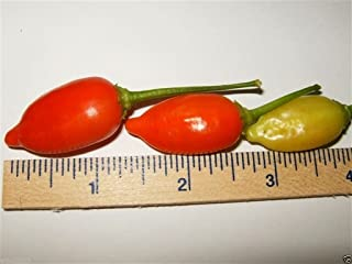 Inca Red drop,Pepper (25 Seeds) Aromatic,fruity ,Great for pickling, Organic !
