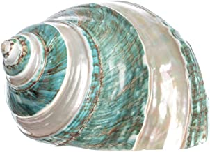 Hermit Crab Home Turbo Shell   Jade Green Banded Turbo Shell 4