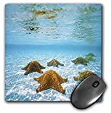 3dRose LLC 8 x 8 x 0.25 Inches Mouse Pad, Starfish Underwater (mp_53306_1)