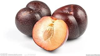 Hot Sale 50pc 2015 Fresh Organic plum seeds NON-GMO 10 kinds Fruit Seeds Four Season Planting
