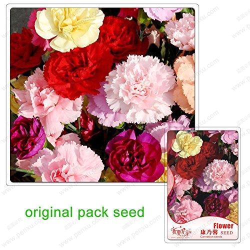 40 graines/Pack, graines de fleurs rares carnation rose fleur, des plantes en pot de graines de fleurs carnation Balcon