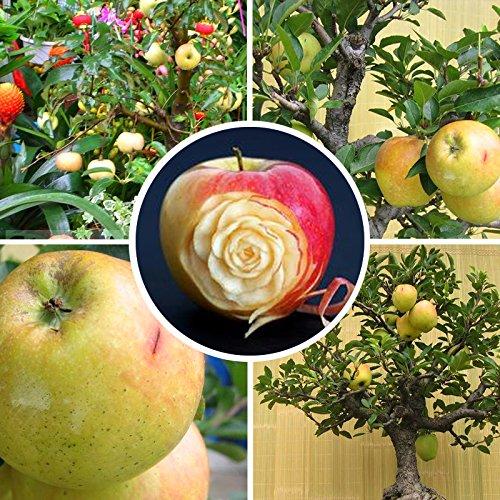 20 pcs/sac exotiques Graines Outdoor Juicy vivaces Bonsai Garden Fruit Plante en pot Arbre de fleurs Pot Planters