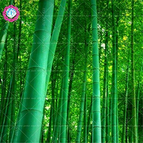 Sac bambou Moso