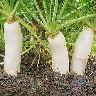 Outsidepride Daikon Radish Cover Crop Seed - 5 lbs