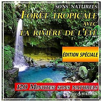 Forêt tropicale avec la rivière de l'été: sons naturels: édition spéciale