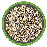 MeineHennen (EUR 0,83/ kg) KÖRNER-VITAL EXZELLENT 30 kg - Premium Körnermischung für Hühner und Wachteln mit Muschelschalen, Buchweizen und Hirse - Alleinfuttermittel