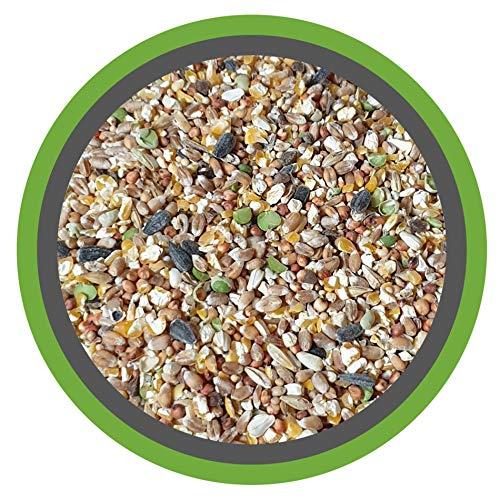 MeineHennen (EUR 0,87/ kg) KÖRNER-VITAL EXZELLENT 30 kg - Premium Körnermischung für Hühner und Wachteln mit Muschelschalen, Buchweizen und Hirse - Alleinfuttermittel