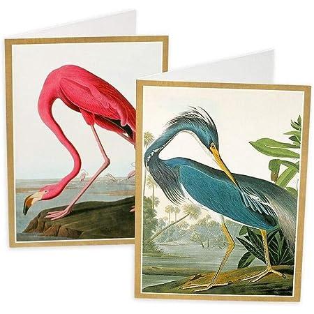 Set of 6 British Bird Art Note Cards Postcards and Envelopes