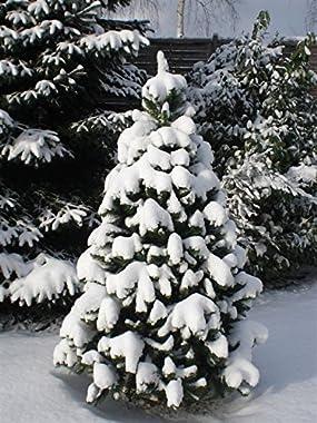 Árbol de Navidad (no inflamable) con soporte de metal, montaje rápido gracias al sistema plegable, de diversos tamaños y mate