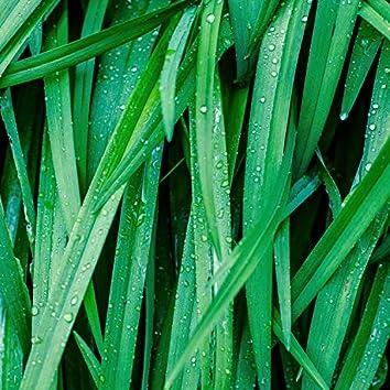 25 Enchanting Rain Droplet Recordings