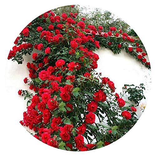 SummerRio 100Pcs Semillas Anuales Flores Exterior Templadas, Multicolores, Rosas, Plantas de Jardín...