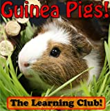 Guinea Pigs! Learn About Guinea Pigs And Learn To Read - The Learning Club! (45+ Photos of Guinea Pigs) (English Edition)