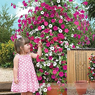 Best pink and white petunias Reviews