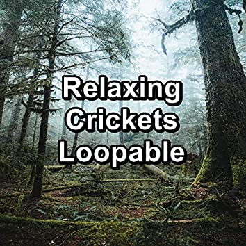 Relaxing Crickets Loopable