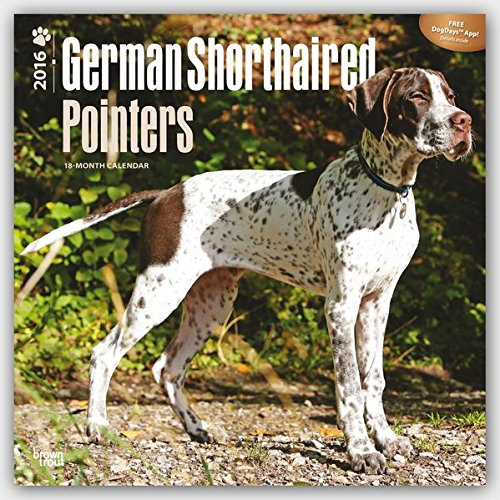 German Shorthaired Pointers 2016 - Deutsch Kurzhaar - 18-Monatskalender mit freier DogDays-App: Original BrownTrout-Kalender [Mehrsprachig] [Kalender] (Wall-Kalender)