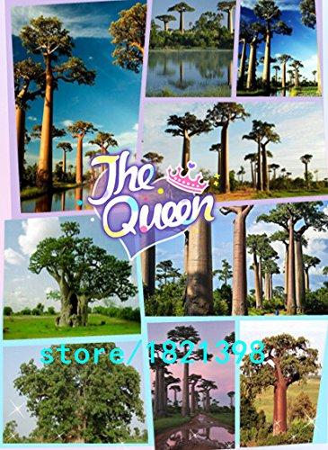 100 Samen Laubbaum Samen Baobab-Baum Samen für Heim & Garten