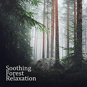 Soothing Forest Relaxation