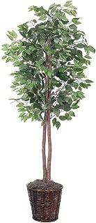 Vickerman 6-Feet Artificial Ficus Tree in Decorative Brown Rattan Basket