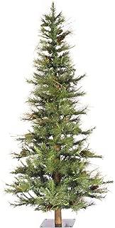 alpine balsam fir tree