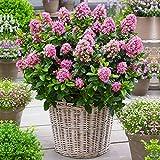 GardenersDream Outdoor Plants