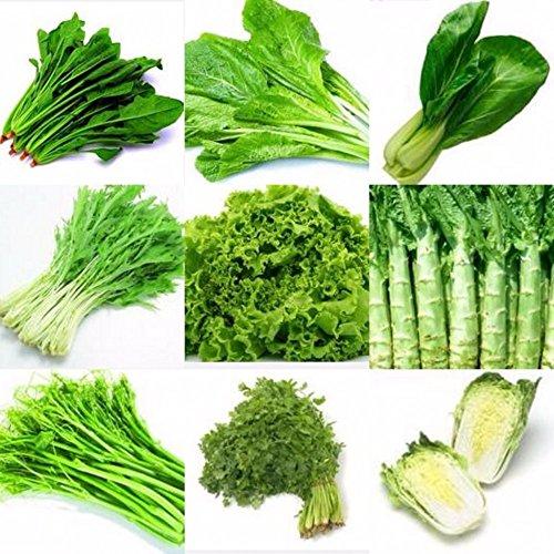 mixtes 100 graines / paquet de graines de légumes quatre saisons de l'intérieur bonsaï bundle couleur combinaison emballage d'origine balcon