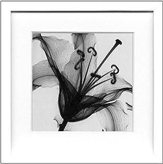 JIG アートポスター モダン スタイル アート スティーヴン・N.マイヤーズ Lily Muscadet ISM-14212