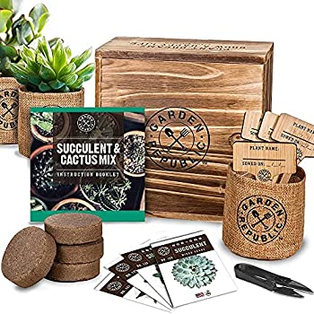 Best succulent gifts Reviews