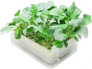 リビングファーム(Living Farm) ミニ水耕菜園キットBK ベビーケール クリア 20×13×6cm LFS-327