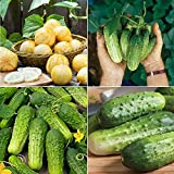 David's Garden Seeds Collection Set Cucumber Pickling RF0903 (Multi) 4 Varieties 200 Seeds (Non-GMO,...