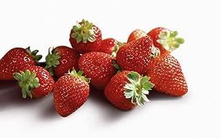 Best white jewel strawberry seeds Reviews