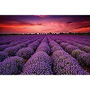 great-art Fotoposter Lavendel Feld - 140 x 100 cm Wandposter Poster Zauber der Provence Wandbild