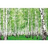 GREAT ART® Mural de Pared – Bosque De Abedules – Foto del Bosque Y Naturaleza Paisaje Sendero Bosque Flora Y Fauna Foto Papel Pintado Y Tapiz Y Decoración (210 x 140 cm)
