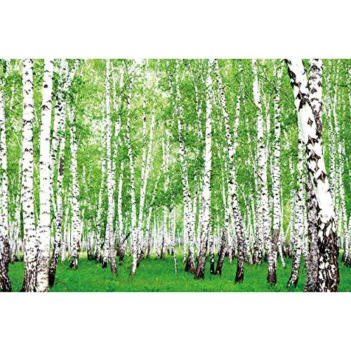GREAT ART® Fototapete – Wald Bäume Birkenwald – Wandbild Dekoration Natur Grün Landschaft Bildtapete Birke Landschaft Nordic Forest Bild Wallpaper Wandtapete Poster Wanddeko (210 x 140 cm)