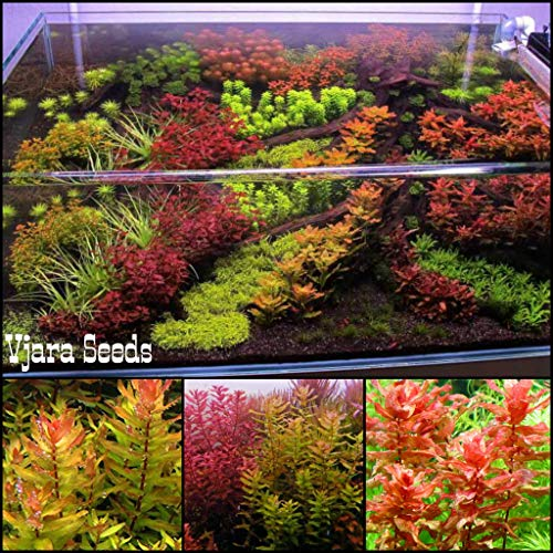 Vajra Aquarium Plants Seeds and Water Grass Seeds Mixed Pack 500 Pieces Packet