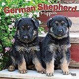 German Shepherd Puppies - Deutsche Schäferhunde - Welpen 2021 - 16-Monatskalender mit freier DogDays-App: Original BrownTrout-Kalender [Mehrsprachig] [Kalender] (Wall-Kalender)