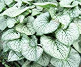 20 Pcs / Sac rares réels Thaïlande Caladium Plantes d'intérieur Graines bricolage jardin fournitures Bonzai Seeds 21 types de Hot Sale