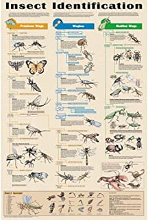 Insect Identification Educational Science Arthropod Classroom Chart Print Poster 24x36