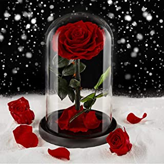 puto Preserved Real Rose Eternal Rose in Glass Dome Gift for Her Thanksgiving Christmas Valentine's Day Birthday Mother's Day (Red)